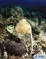 crete-scuba-diving-4.jpg
